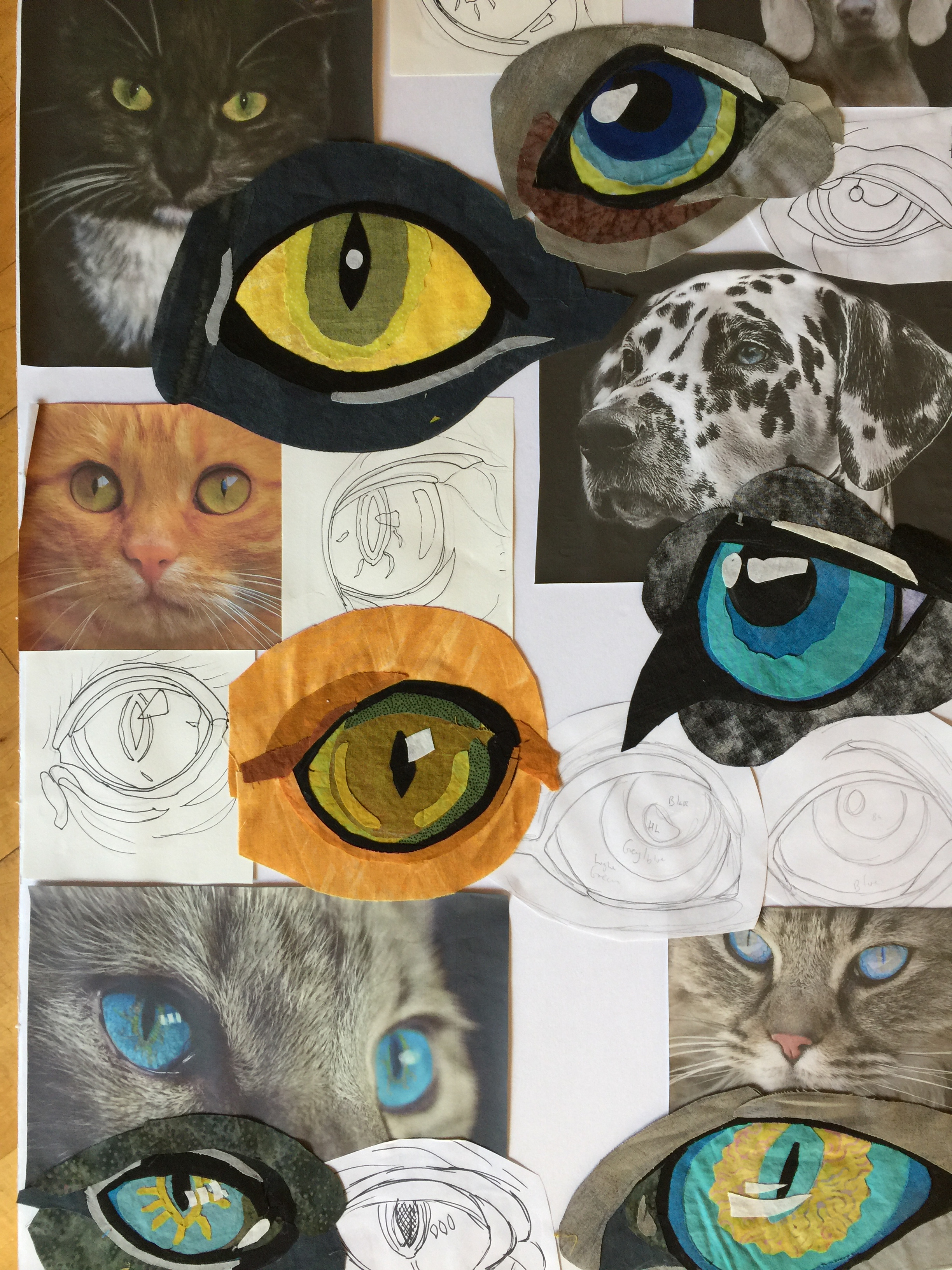 Pet eyes by Jane Haworth